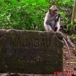 Monkey Forest & Ubud Market, Bali